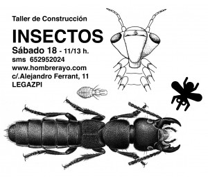 TALLER INSECTOS